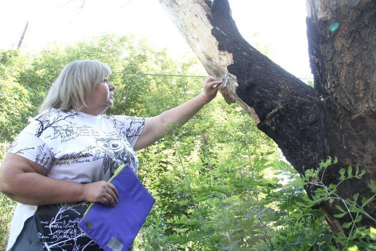 В Омске по заявкам жителей  обследуют старые деревья (ФОТОРЕПОРТАЖ)