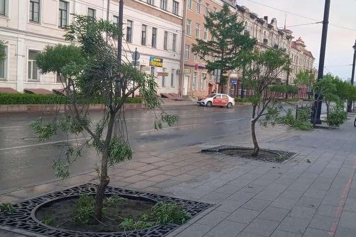 В Омске вандалы повредили три ивы на улице Ленина.ВИДЕО