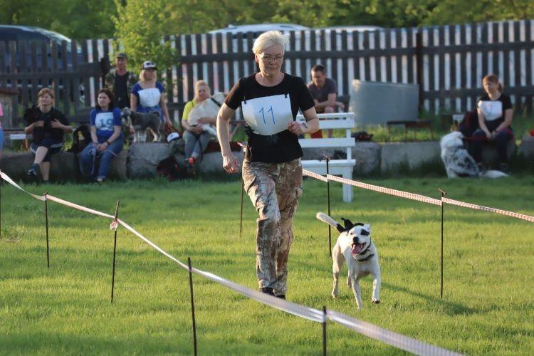 Две немецкие овчарки победили в чемпионате Омской области (ФОТО)