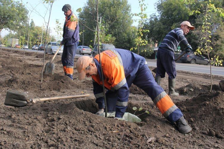 В Омске высаживают яблони и липы : фоторепортаж с улицы Мельничной