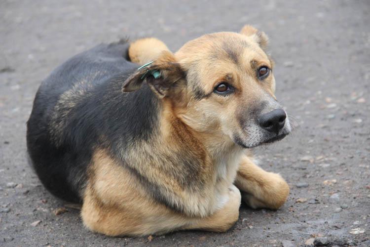 Омскому муниципальному приюту для животных передали корма и оборудование для операционной (ФОТОРЕПОРТАЖ)